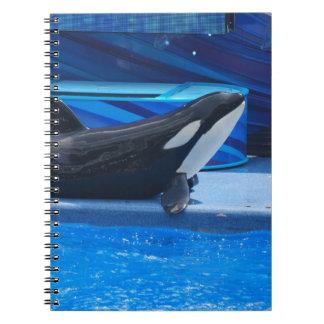Presentación del cuaderno de la orca