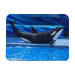 Presentación del imán flexible de la orca