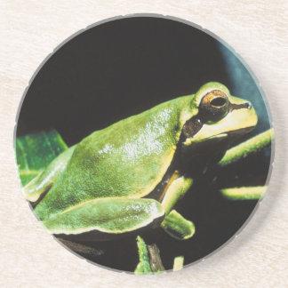 Presentación del práctico de costa de la rana posavasos diseño