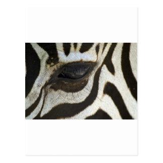 Presente blanco y negro del regalo del safari del tarjetas postales