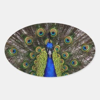 Presentes de los regalos del azul real del pavo colcomanias oval personalizadas