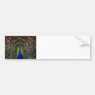 Presentes de los regalos del azul real del pavo re pegatina de parachoque
