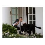 President Barack Obama with Bo Postcard