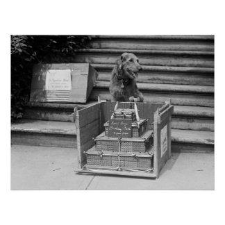 President Harding s Airedale Terrier 1922 Posters