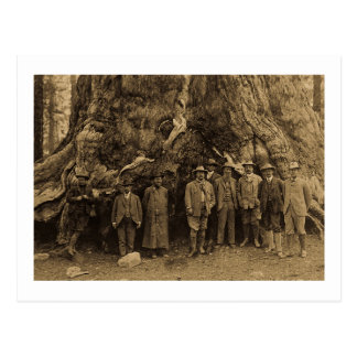 President Roosevelt and John Muir Beneath (Sepia) Postcards