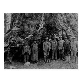 Presidente Roosevelt y John Muir California 1903 Postales