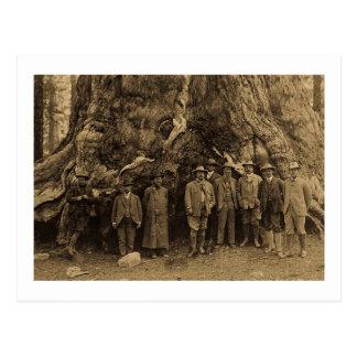 Presidente Roosevelt y John Muir debajo de (sepia) Postales