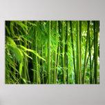 Presión de lienzo lienzo Canvas Print   bambú Impresiones