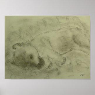 """Presión de lienzo """"Terrier Irlandesa cachorro """" Posters"""