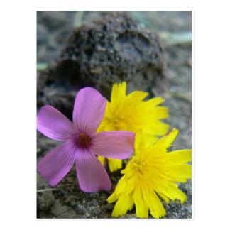 Prettiest Flower Postcard