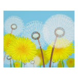 Pretty and Colorful Dandelions Illustration Poster