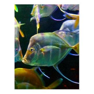Pretty Aquatic Up Close School Of Fish Postcard