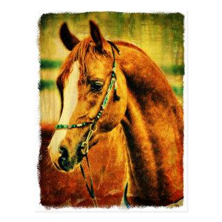 Pretty Arabian Post Card