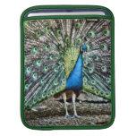 Pretty as a Peacock Ipad sleeve