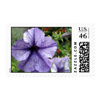 Pretty As a Petunia Postage Stamps