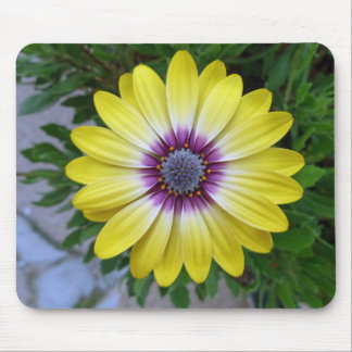 Pretty as Sunshine Mouse Pad