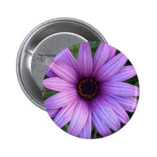 Pretty Aster Flower  Button