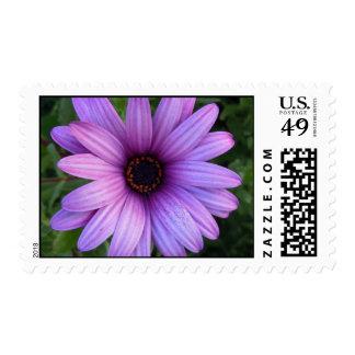 Pretty Aster Flower Postage Stamp