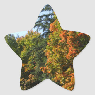 Pretty Autumn Maple Trees Star Sticker