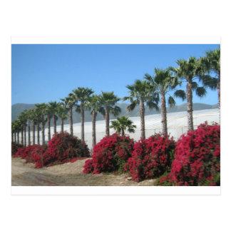 Pretty Baja California Palm Trees and Flowers Postcard