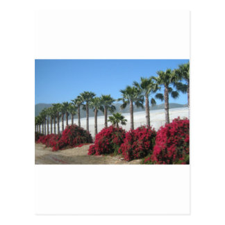 Pretty Baja California Palm Trees and Flowers Postcard