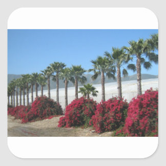 Pretty Baja California Palm Trees and Flowers Square Sticker