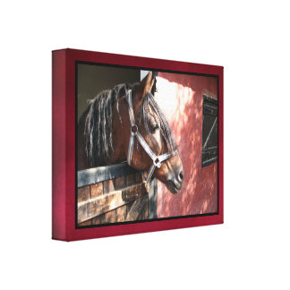 Pretty Bay Horse in a Sunlit Stable Canvas Print