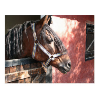 Pretty Bay Horse in a Sunlit Stable Postcard