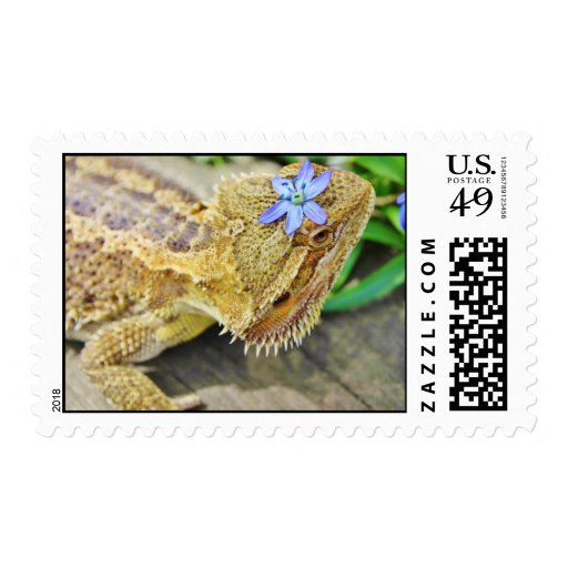 Pretty Bearded Dragon Postage Stamps
