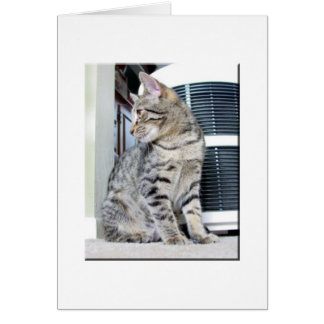 Pretty Bengal Baby Cards