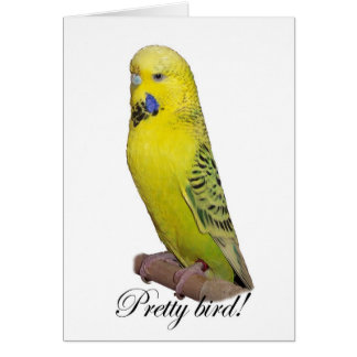 Pretty Bird card