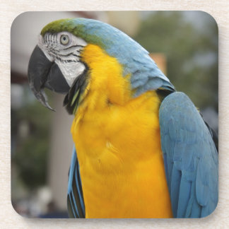 Pretty Bird Coaster