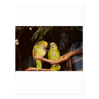 Pretty Bird Couple Postcard