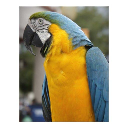Pretty Bird Personalized Letterhead