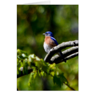 Pretty Bird Send a Smile Card