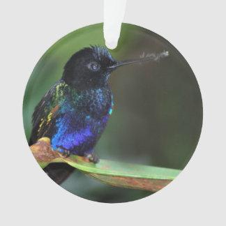 Pretty Black, Blue and Green Hummingbird