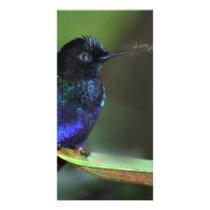 Pretty Black, Blue and Green Hummingbird Card