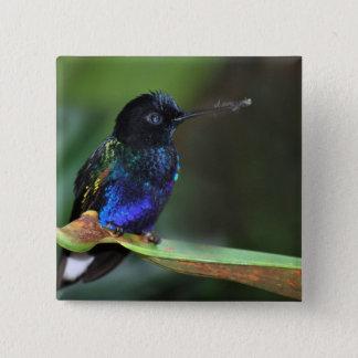 Pretty Black, Blue and Green Hummingbird Pinback Button
