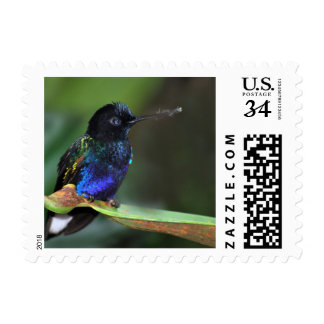 Pretty Black, Blue and Green Hummingbird Stamps