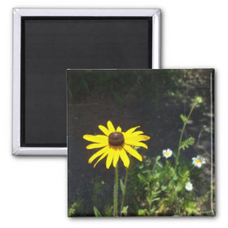 Pretty Black Eyed Susan and White Daisies Magnet