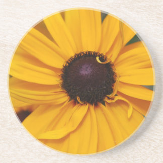 Pretty Black-Eyed Susan Coaster