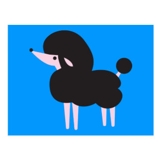 Pretty Black french poodle nose in the air Postcard