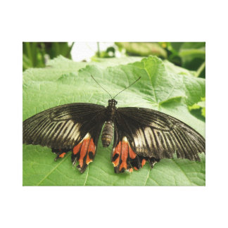 Pretty Black Red and Gold Butterfly Canvas Print