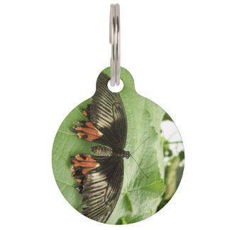 Pretty Black Red and Gold Butterfly Custom Dog Tag
