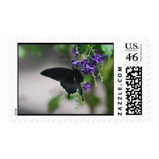 Pretty Black Swallowtail Butterfly Stamp