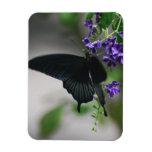 Pretty Black Swallowtail Butterfly Flexible Magnets