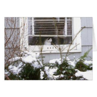 Pretty Black & White Cat in Window Christmas Card