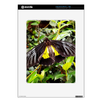 pretty black yellow butterfly photograph iPad decals