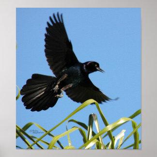 Pretty Blackbird Poster