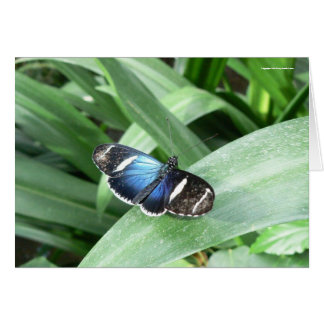 Pretty Blue Butterfly Greeting Card